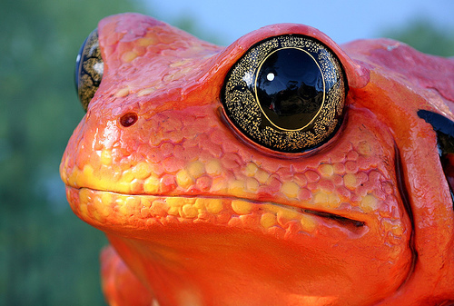 Toad (by Thomas Hawk)